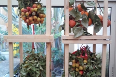 composizione-frutta